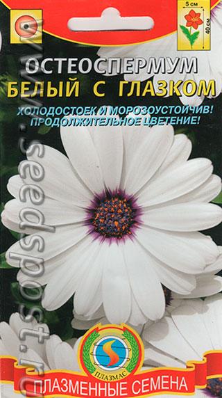 Семена аэлита остеоспермум