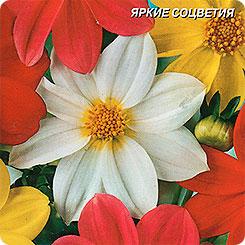 Георгина Веселые ребята, Смесь, 0,15 г