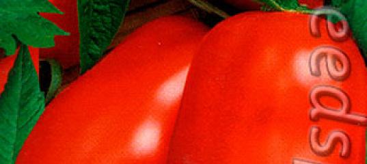 Томат засолочный деликатес характеристика и описание сорта
